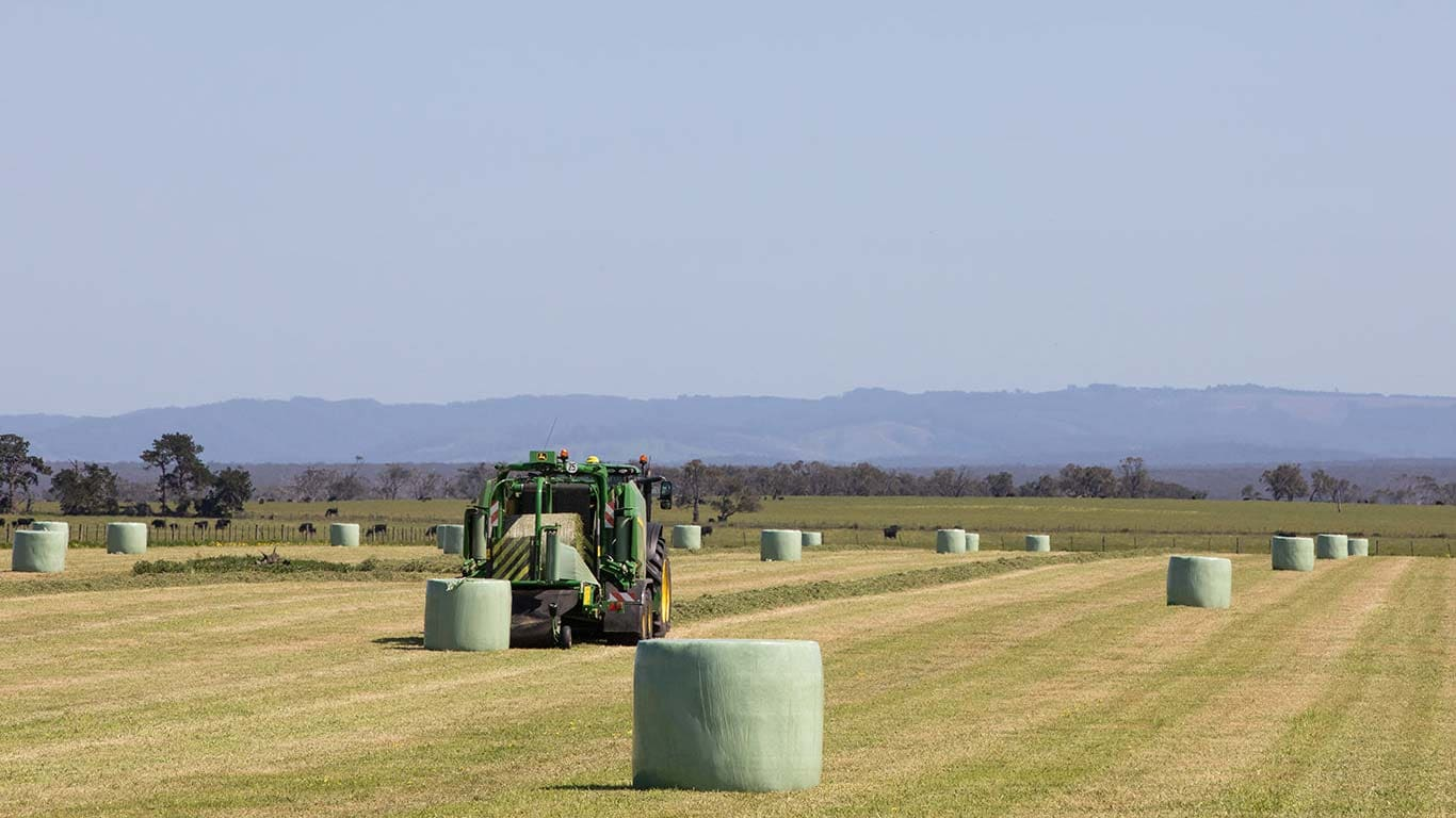 Wide view of bales on a field